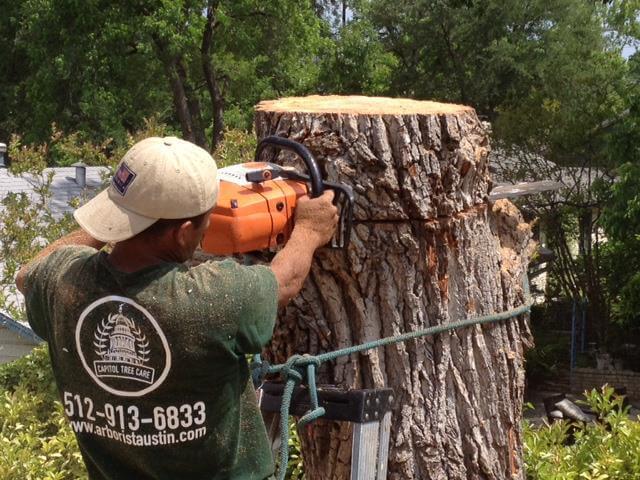 Austin Tree Cutting