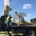 Texas Parks and Wildlife Department, A.E. Wood Fish Hatchery-  Crane Removal of collapsed Hackberry in the San Marcos River.