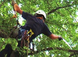 tree care austin tx
