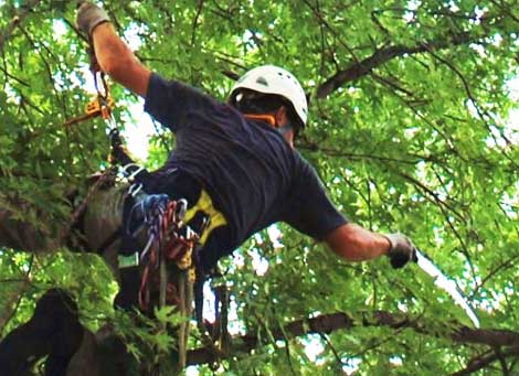 Tree Trimming Austin