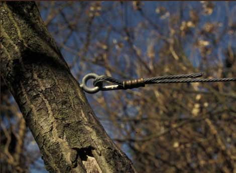 Austin Tree Cabling and Bracing Services