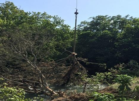 Austin Texas Tree Removal
