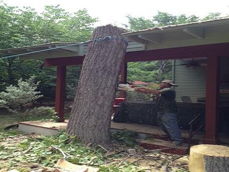 Austin Tree Specialists