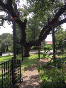 TREE BRACE PROJECT