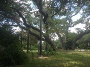 TREE BRACE PROJECT-