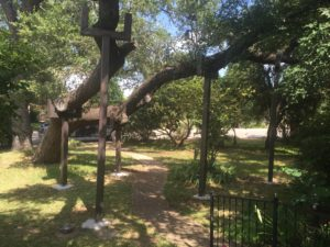 TREE BRACE PROJECT- TREE REMOVAL VS. TREE BRACE