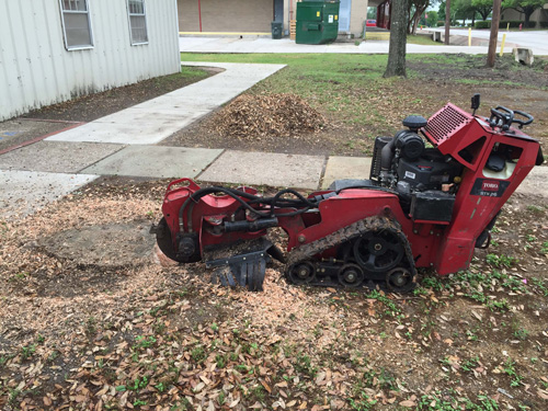 tree removal stump grinding