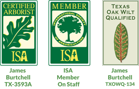 Austin Tree Removal Certified Arborist Tree Trimming And