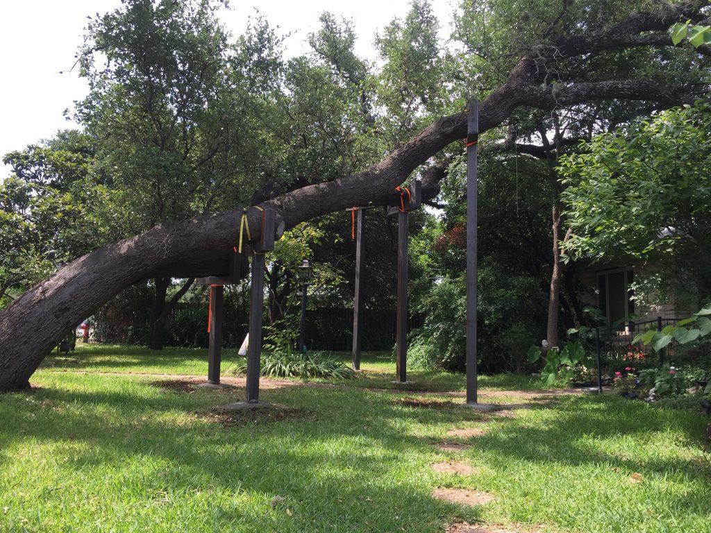 steel braces live oaks