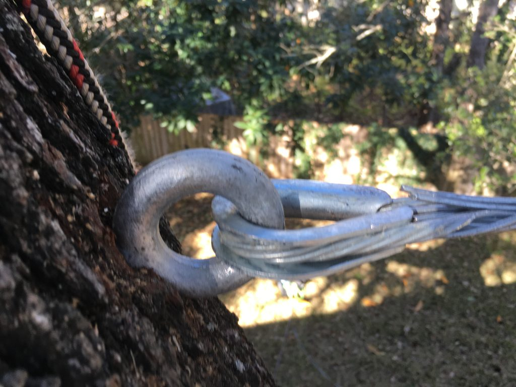 Tree Cabling Amp Bracing In Austin Capitol Tree Care