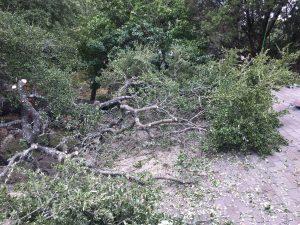 Live Oak Crane Removal