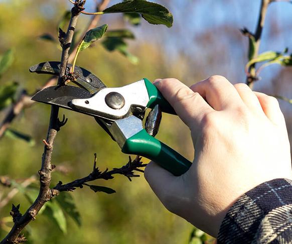 tree pruning trimming