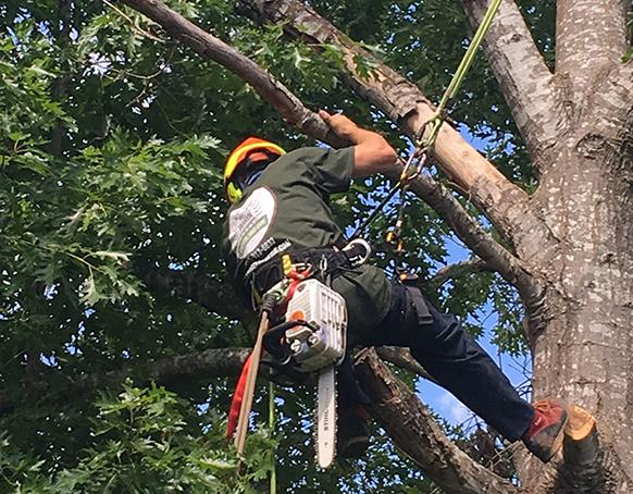 tree crown adjustments