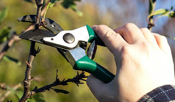 tree pruning lakeway