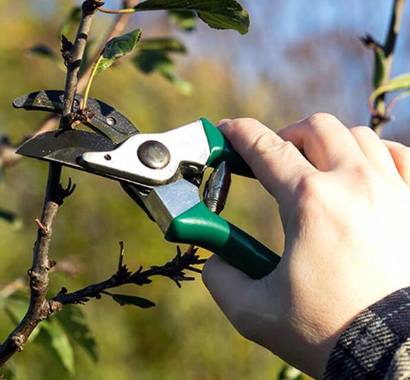 tree pruning trimming round rock