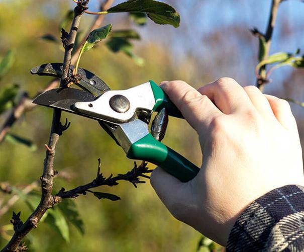 tree trimming pruning