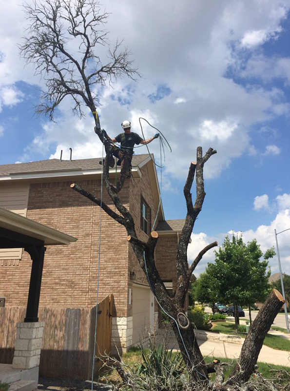 lakeway tree removal services