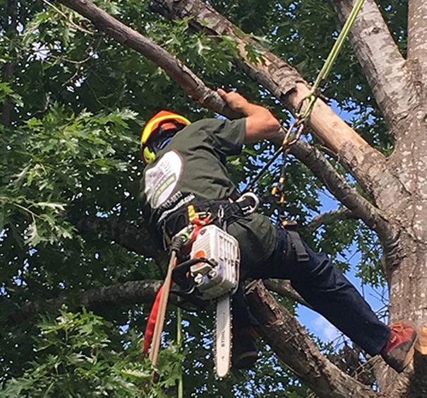 tree crown adjustment