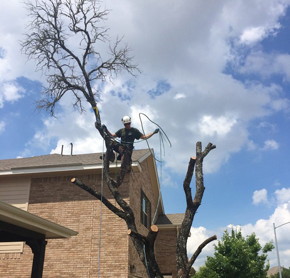 tree removal service georgetown